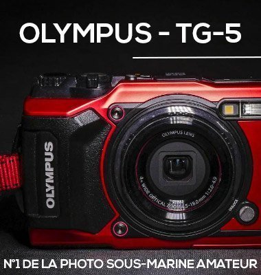 Olympus TG-5 photographie sous-marine